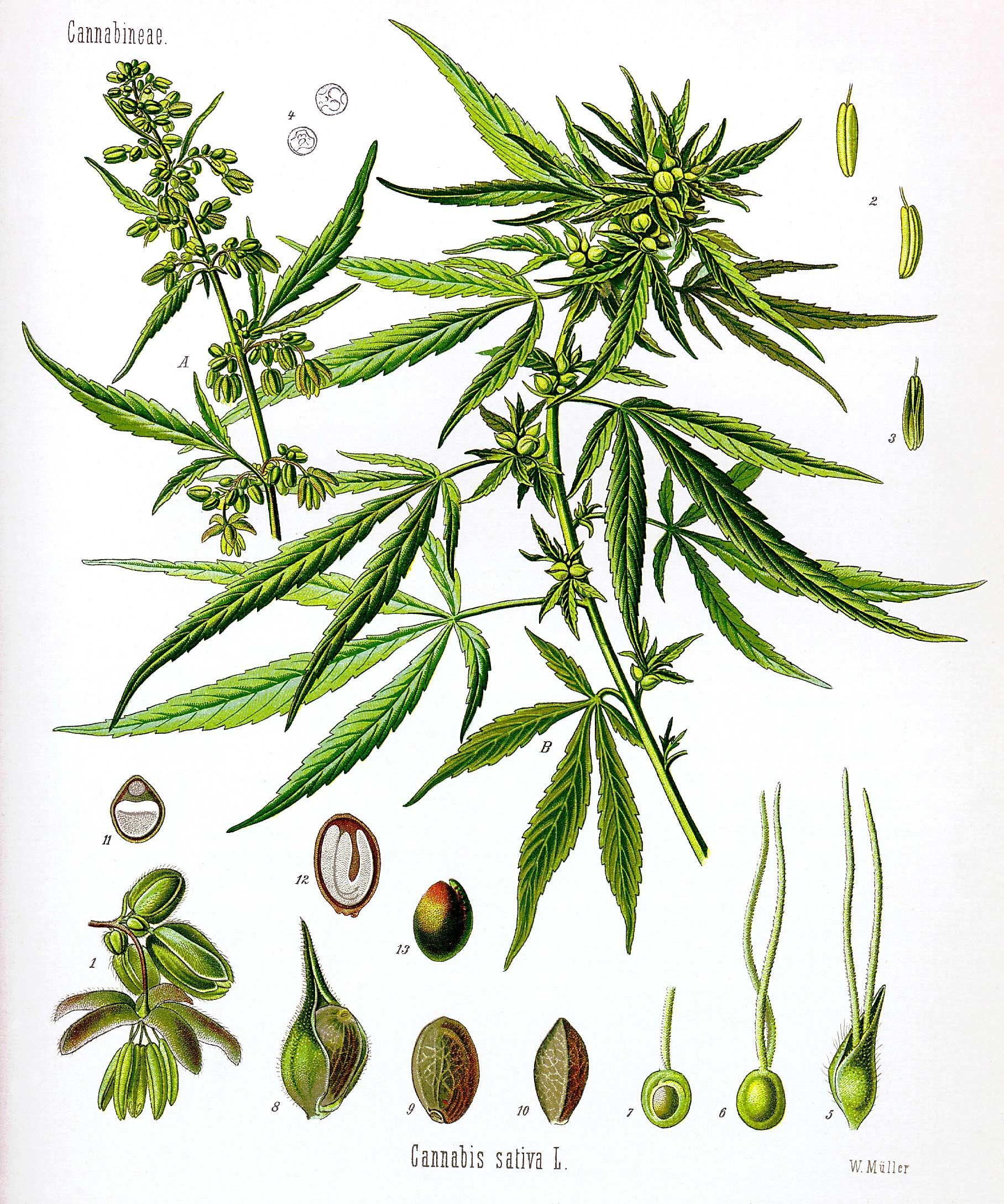 MARIJUANAAAAAAaaaaaaaaaaaaa marijuana?
