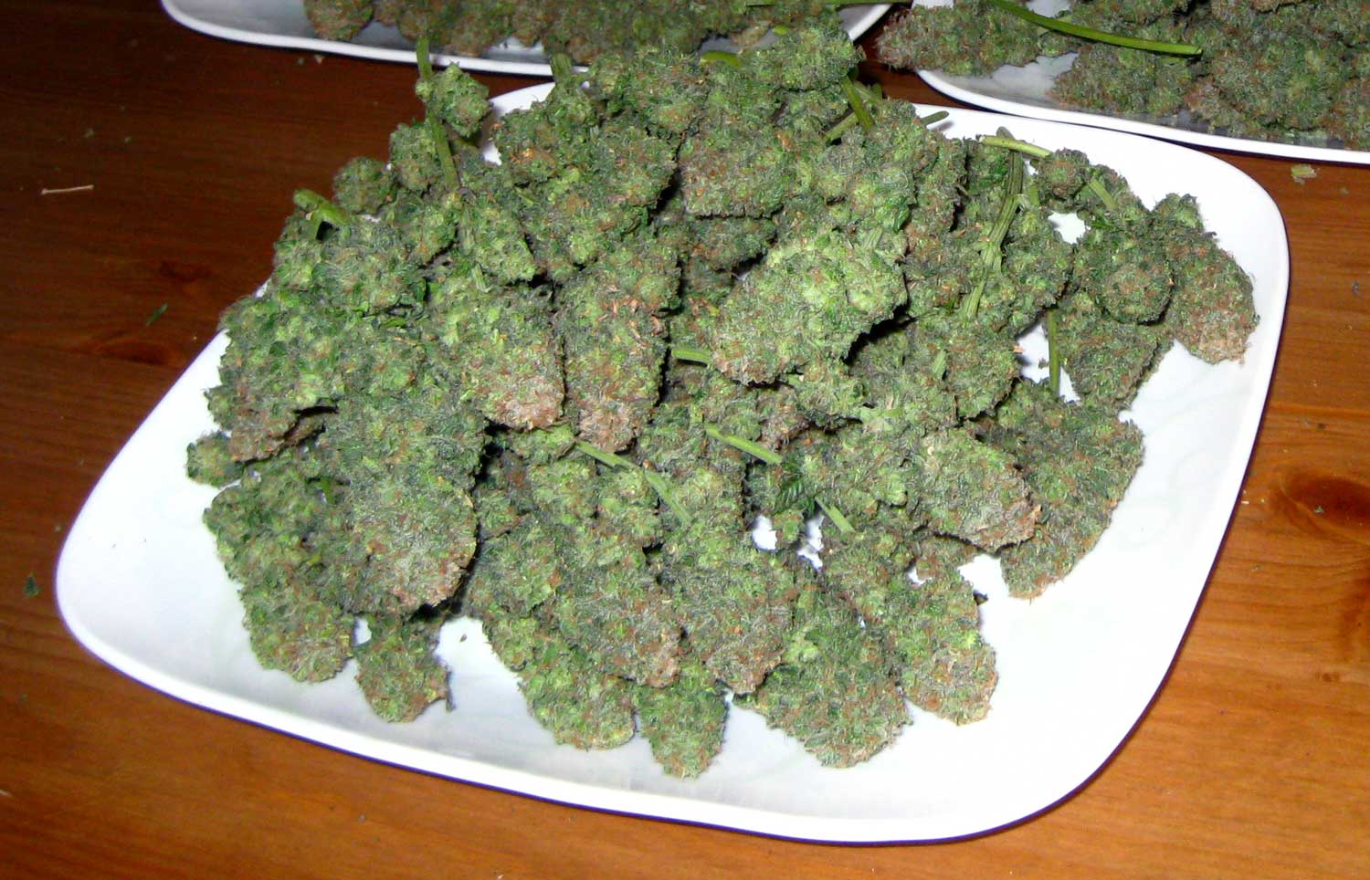 How to grow purple cannabis buds or pink grow weed easy most of the purple was trimmed away because the majority of purple came from the leaves nvjuhfo Image collections