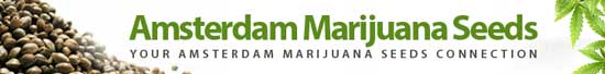 Amsterdam Marijuana Seeds has been online since 2002 and sells cannabis seeds to the USA, Canada and Worldwide