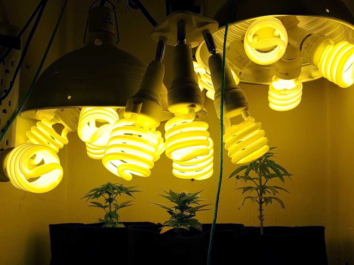 how to train auto flowering cannabis plants grow weed easy