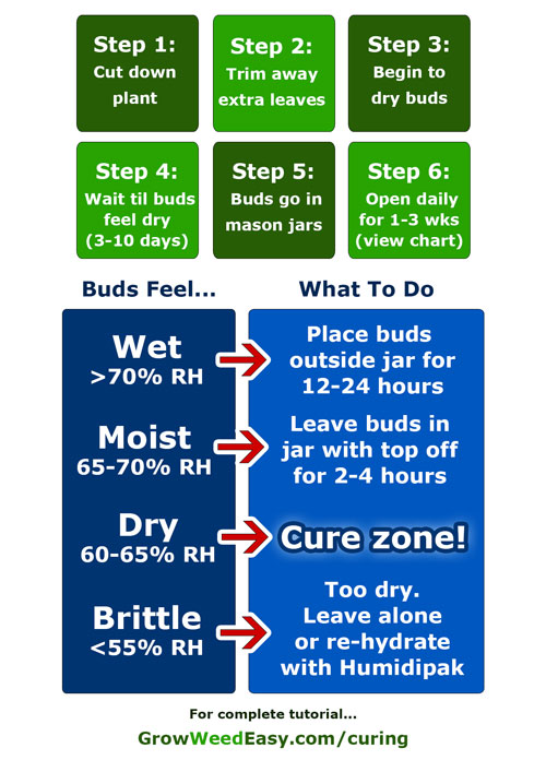Learn how to dry and cure your buds perfectly every time with this cheat sheet to curing!