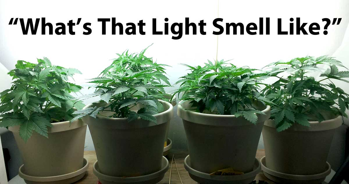 How Does The Color Spectrum Of Light Affect Growing