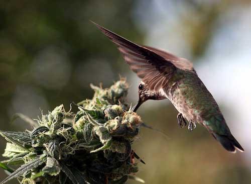 on hummingbird wings a novel