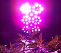 Learn more about growing with LED grow lights