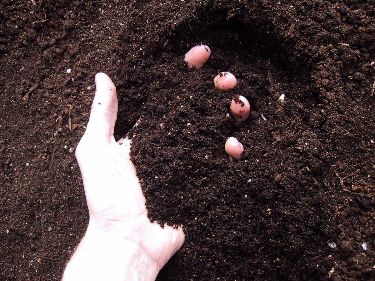 True organic growing vs using organic nutrients buds for Mineral soil vs organic soil