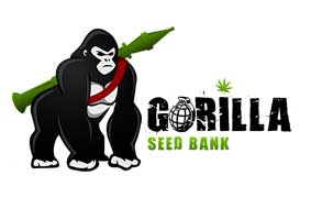 Gorilla seed bank is a cannabis seed source that is relatively new, but has made a great name for itself with a wide selection, responsive customer service and good stealthy shipping