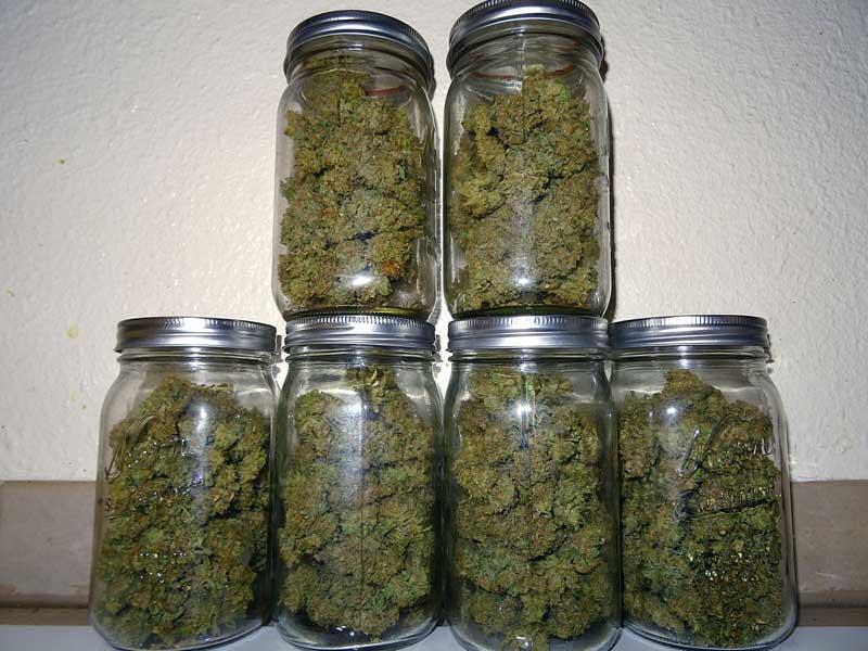 curado de la marihuana en botes de cristal