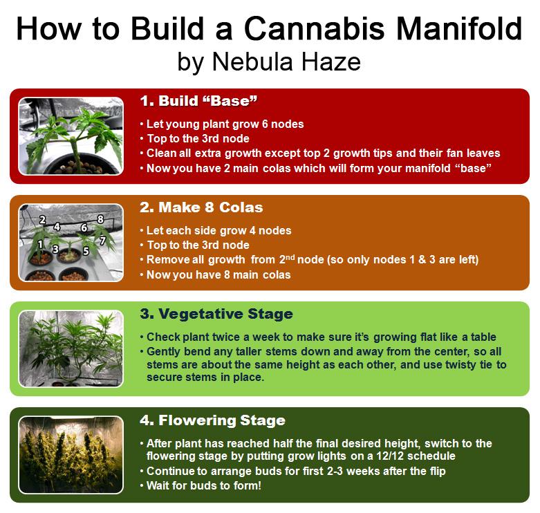 Topping Cannabis Diagram