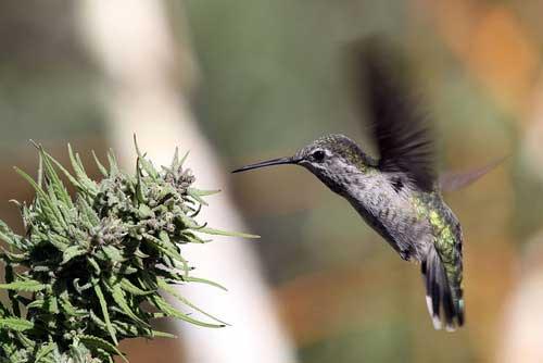 animals on cannabis