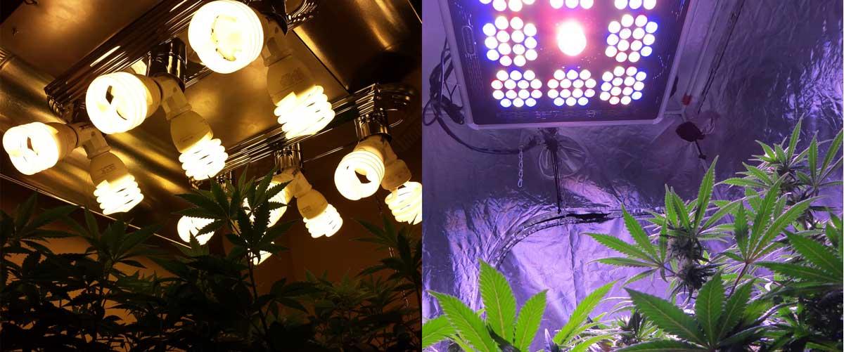 Which Led Grow Lights Are Best For Growing Cannabis