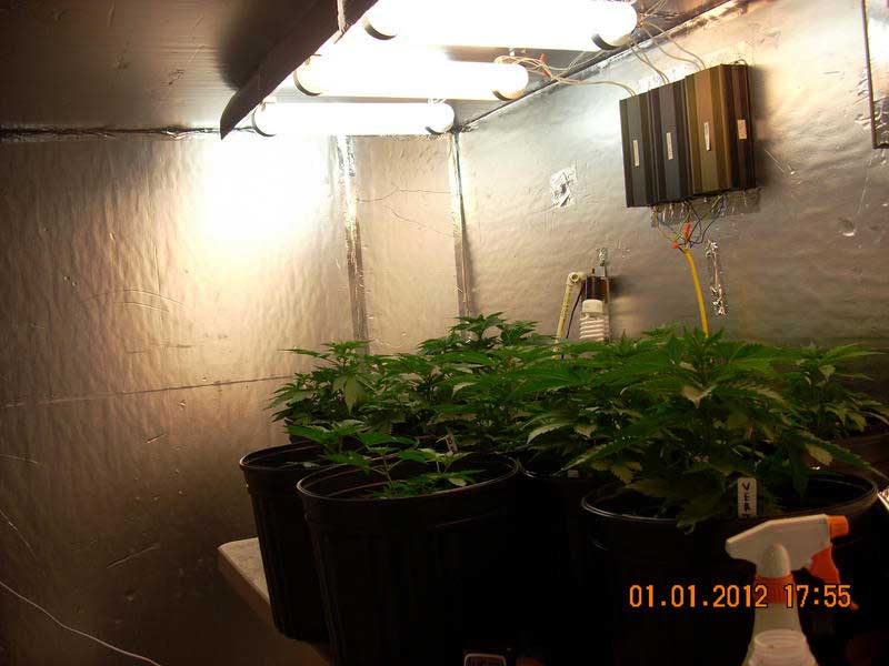 induction lighting pros and cons. Young Vegetative Cannabis Plants Under Magnetic Induction Grow Lights Lighting Pros And Cons