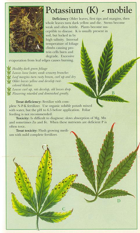 cannibus plant deficiency chart: Marijuana problems symptoms old version please visit the new