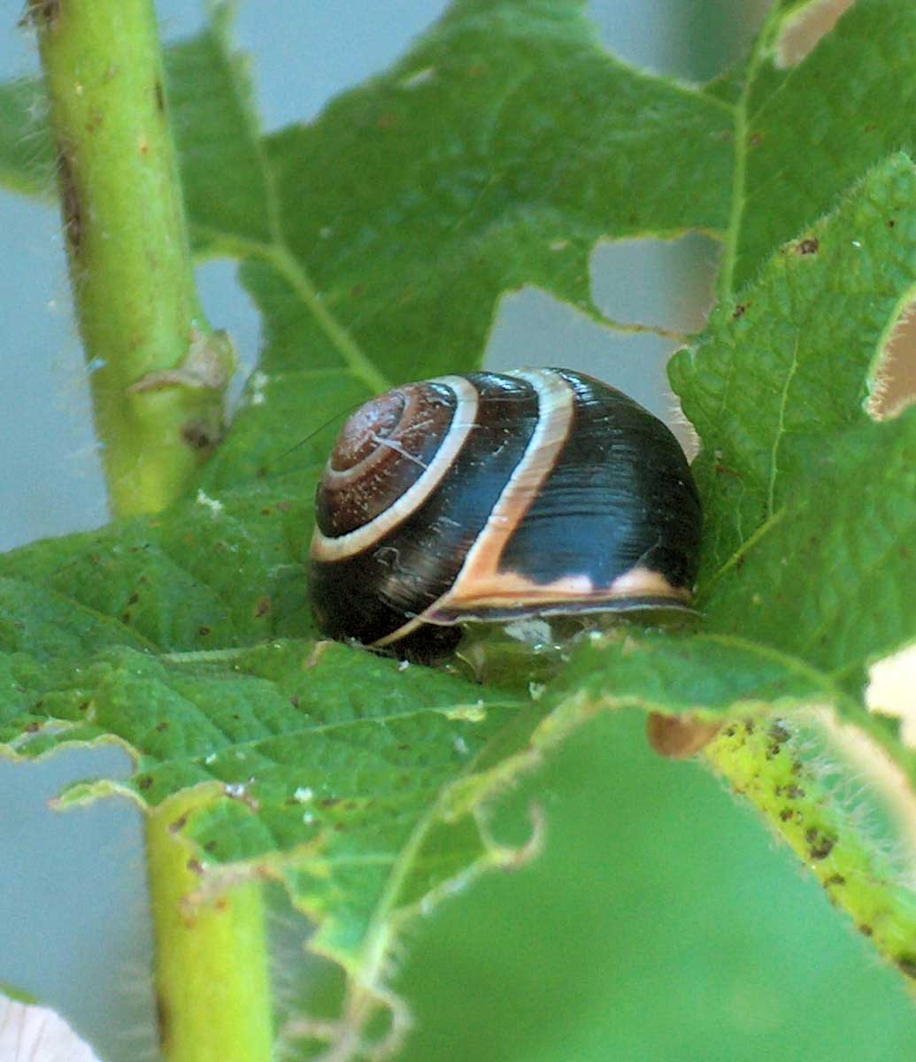 How To Get Rid Of Slugs Or Snails Grow Weed Easy