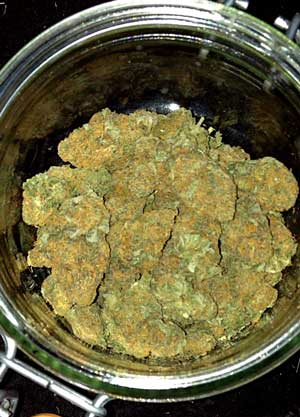 These thai buds in a jar are top-shelf - Professional-quality cannabis buds look, taste and smell great