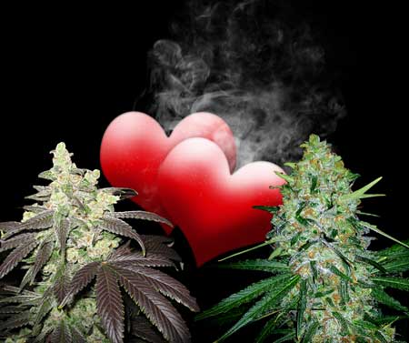 how to grow weed at home easy