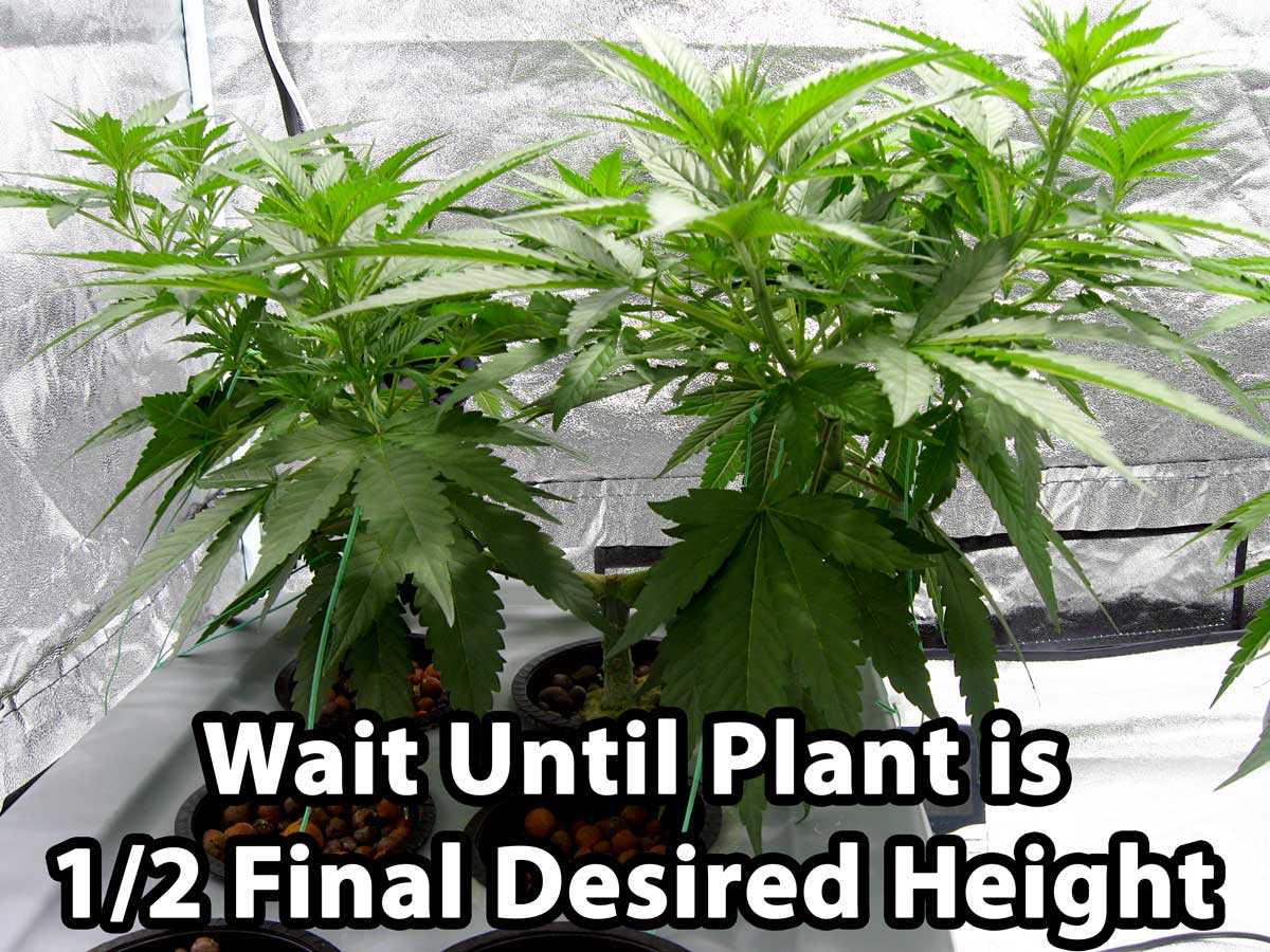 weed final Product name: finale super concentrate weed, grass and brush killer.