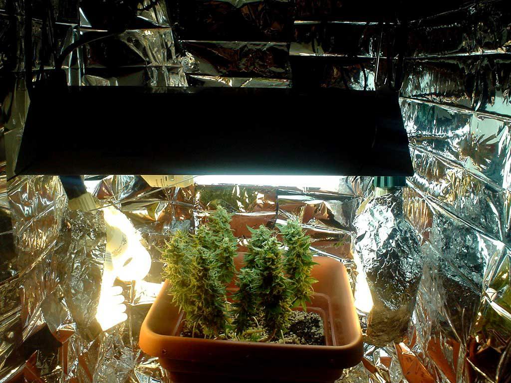 indoor plant light fixtures image collections