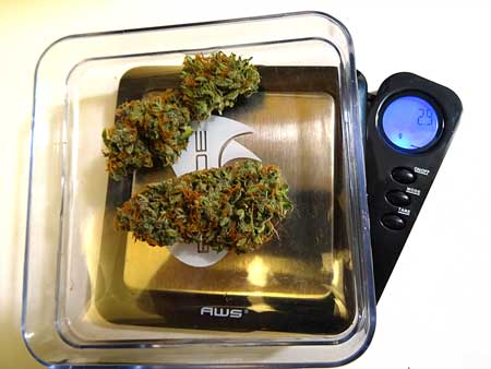 Small Critical Jack cannabis buds ended up weighing 2.9 grams after they've dried