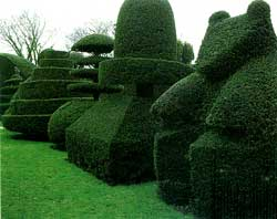 Topiary takes advantage of LST methods to break apical dominance
