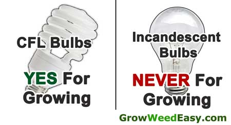 Incandescent bulbs are NEVER for growing marijuana, but CFLs work great