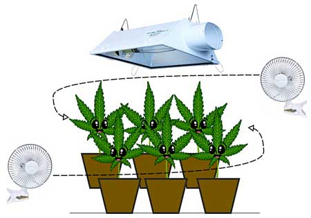Great air circulation and overall airflow makes cannabis plants happy!