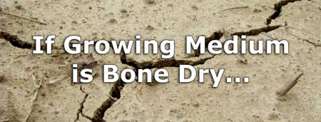 If your growing medium is bone dry, then you know your cannabis plant is underwatered