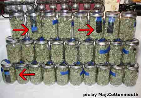 Marijuana buds curing with Hygrometer III hydrometers to help monitor the humidity during the curing in jars process