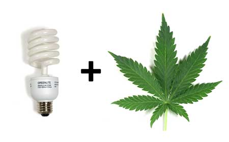 CFLs can be an effective grow light for growing marijuana