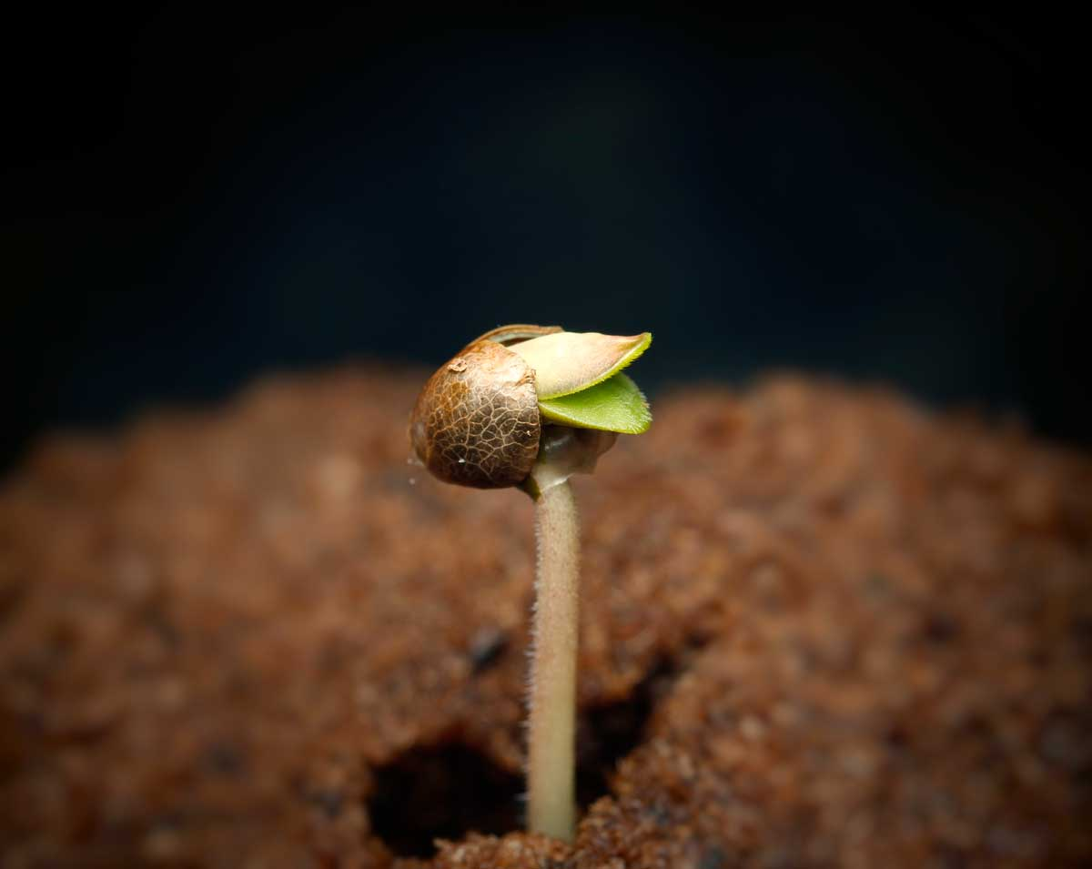 germination of seeds The reason is that salt can dramatically affect a plant's growth in all its life stages,  from seed to maturity to decline and death you can avoid.