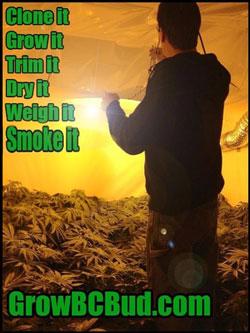 Clone It, Grow It, Trim It, Dry It, Weigh It, Smoke It