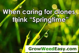 "When caring for clones, try to create ""Spring time"" conditions"