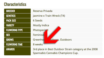 "Get ""Cole Train"" strain at Seedsman!"