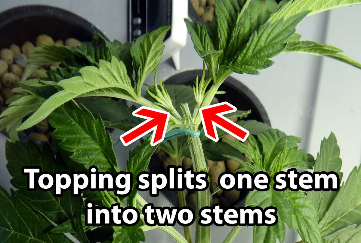 how to make weed plants grow bigger