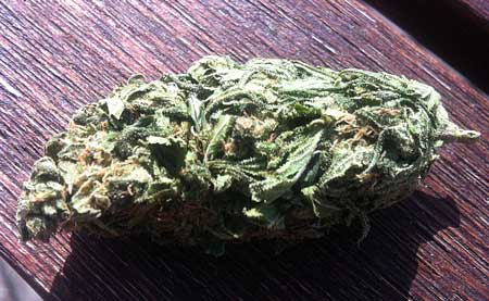 An example of an untrimmed cannabis bud - the sugar leaves have not been removed!