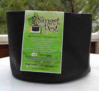 "Fabric pots or ""Smart Pots"" are great for growing cannabis because they allow air to get to the roots from the sides"