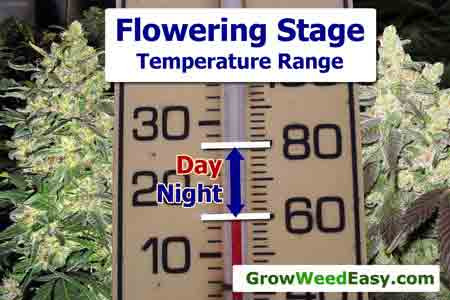 Cannabis optimal temperatures - This diagram shows what temperature marijuana plants thrive at!