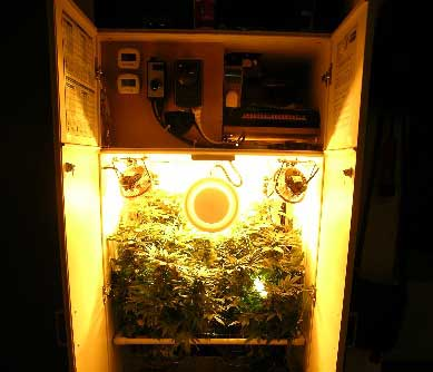 See the inside of G.D. Bud's awesome grow cabinet!