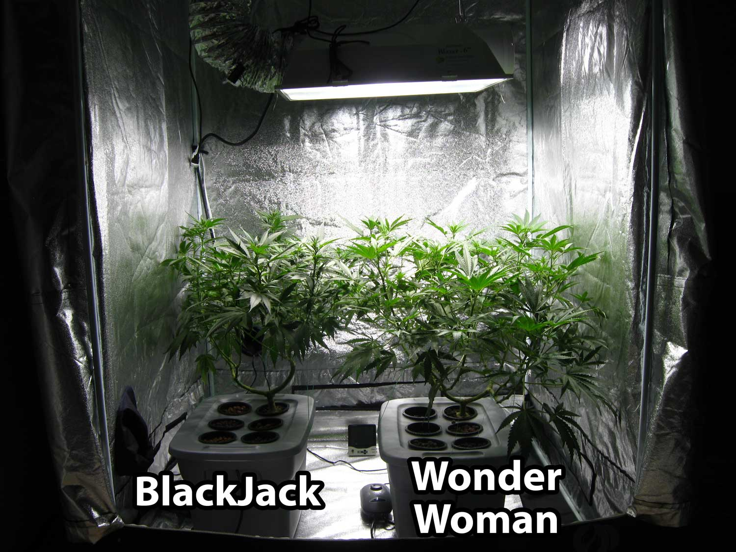 The grow tent is starting to get filled up & 600W Hydroponic Grow Journal - 23.09 oz Harvest! | Grow Weed Easy