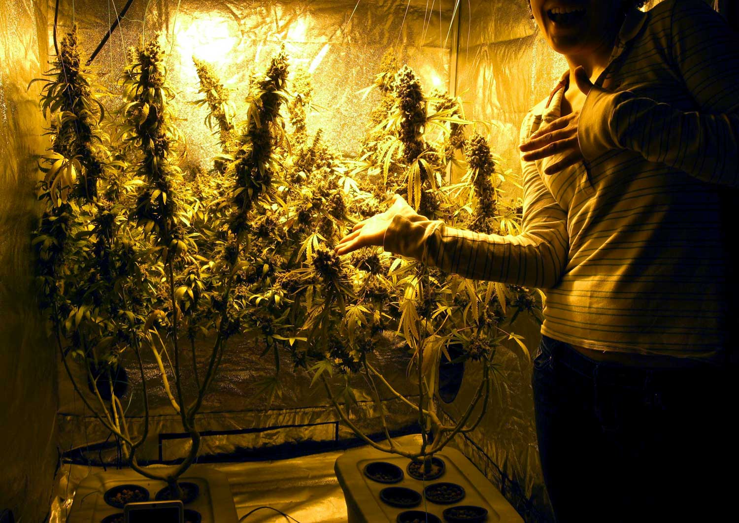 The Basics Of Growing Cannabis Learn To Grow Your Own
