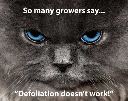 "So many growers say, ""Defoliation doesn't work!"""