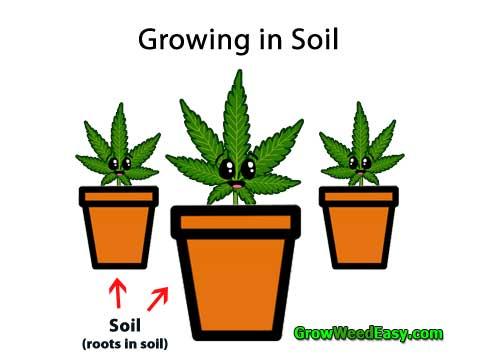 Growing Cannabis in Soil diagram