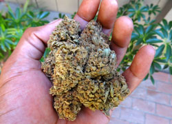 A handful of Original Amnesia!