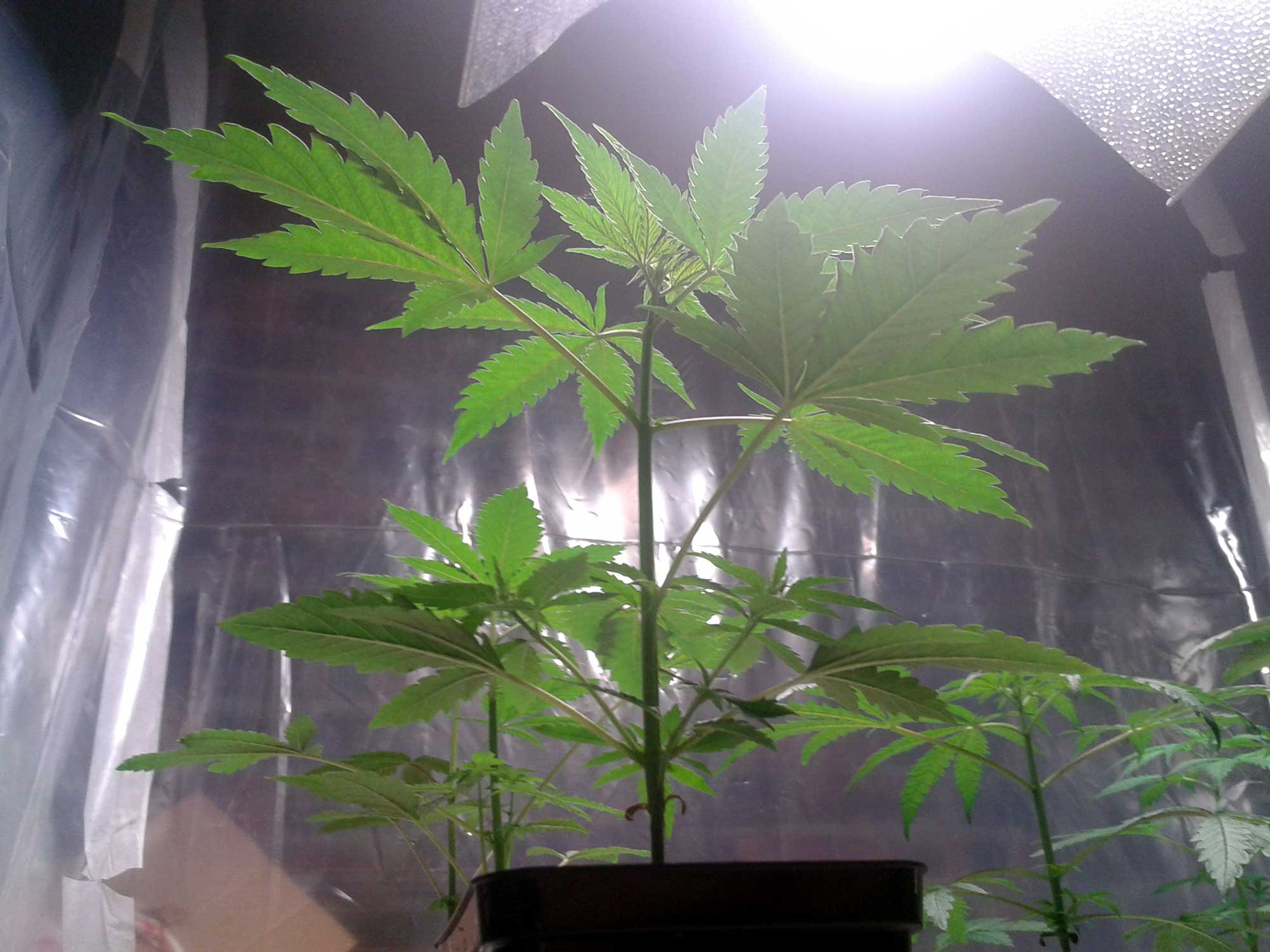 The Basics Tutorial Learn How To Grow Cannabis Indoors