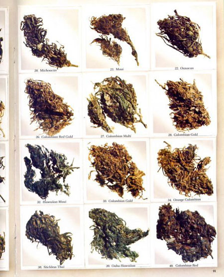 This is what cannabis bud from 1977 looked like - from the High Times magazine