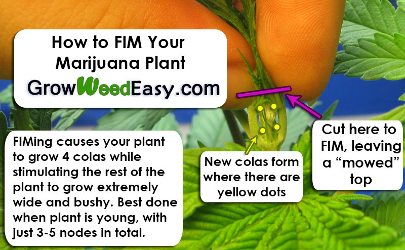 how to grow a marijuana plant from a cutting