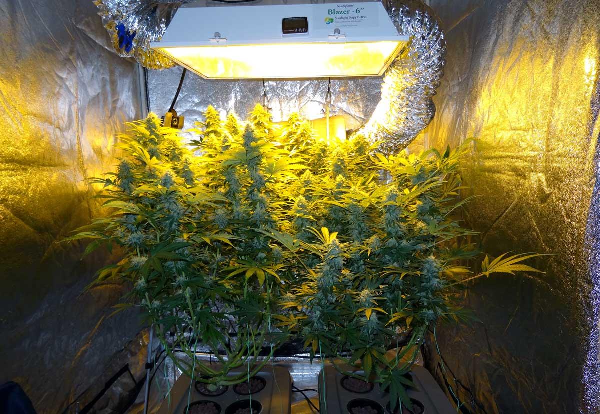 Установка выращивания марихуаны конопля срок цветения