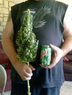Incredibly huge cola, wow!