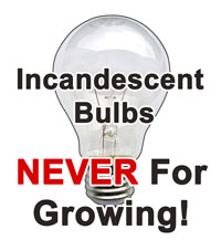 Incandescent light bulbs are not suitable for growing cannabis!