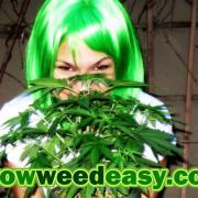 Nebula Haze from Grow Weed Easy.com is dedicated to showing others how easy growing weed can be when you have the right info (click fo closeup)