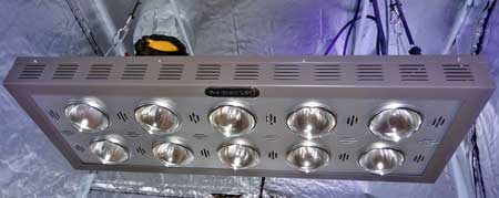 An LED grow light for growing marijuana
